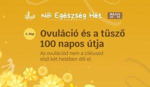 Az ovulációt megelőző folyamatok, a tüsző 100 napos útja · Női Egészség Hét 2. Nap